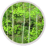 Round Beach Towel featuring the photograph Young Aspen Forest Portrait by James BO Insogna