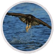 Round Beach Towel featuring the photograph Young Bald Eagle Catching Fish by Coby Cooper