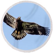 Young Bald Eagle Flight Round Beach Towel by Eleanor Abramson