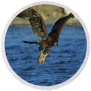 Round Beach Towel featuring the photograph Young Bald Eagle With Fish by Coby Cooper