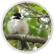 Round Beach Towel featuring the photograph Young Black-capped Chickadee by Angie Rea