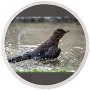 Round Beach Towel featuring the photograph Young Blackbird's Bath by Torbjorn Swenelius