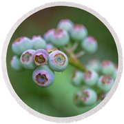 Young Blueberries Round Beach Towel