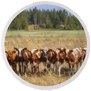 Young Calves On Pasture Round Beach Towel