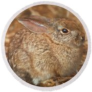 Young Cottontail In The Morning Round Beach Towel