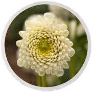 Round Beach Towel featuring the photograph Young Dahlia by Brian Eberly