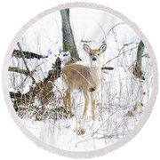 Young Doe And Spring Snow Round Beach Towel