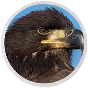 Young Eagle Head Round Beach Towel