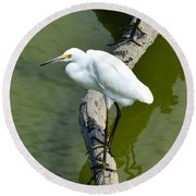 Young Egret Resting Round Beach Towel by Kathy Eickenberg