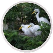 Young Egrets Fledgling And Waiting For Food-digitart Round Beach Towel
