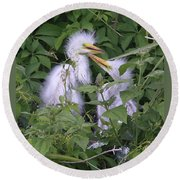 Young Egrets Round Beach Towel