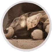 Young Elephant Lying Down Round Beach Towel