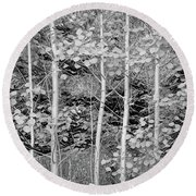 Round Beach Towel featuring the photograph Young Forest by James BO Insogna