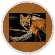 Young Fox In The Wood Round Beach Towel