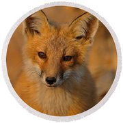 Young Fox Round Beach Towel