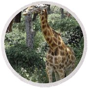 Young Giraffe Round Beach Towel