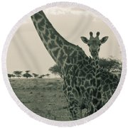 Young Giraffe With Mom In Sepia Round Beach Towel by Darcy Michaelchuk
