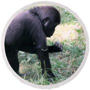 Round Beach Towel featuring the photograph Young Gorilla by Laurel Talabere