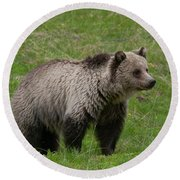 Young Grizzly Round Beach Towel