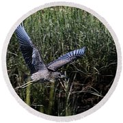 Round Beach Towel featuring the photograph Young Heron Takes Flight by William Selander