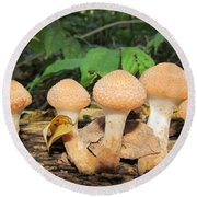 Young Honey Mushrooms Round Beach Towel