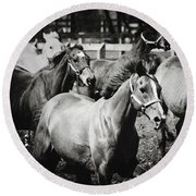 Young Horses On The Pasture Round Beach Towel