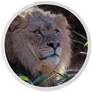 Young Lion King Round Beach Towel by Ronda Ryan