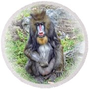 Round Beach Towel featuring the photograph Young Mandrill Fade To White Version by Jim Fitzpatrick