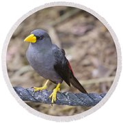 Young Myna Round Beach Towel