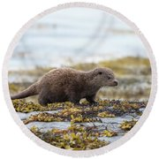 Young Otter Round Beach Towel