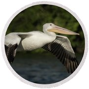 Young Pelican 2016-1 Round Beach Towel by Thomas Young