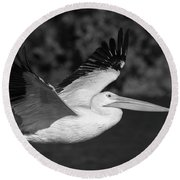 Young Pelican 2016-3 Round Beach Towel