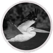 Young Pelican 2016-3 Round Beach Towel by Thomas Young