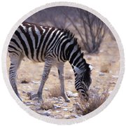 Young Plains Zebra Round Beach Towel by Ernie Echols