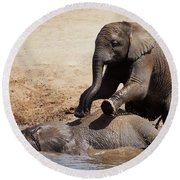 Round Beach Towel featuring the photograph Young Playful African Elephants by Nick Biemans