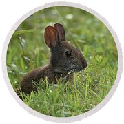 Young Rabbit Dining Round Beach Towel