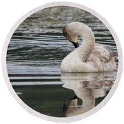 Young Reflection  Round Beach Towel