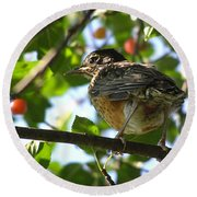 Round Beach Towel featuring the photograph Young Robin by Angie Rea
