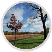 Young Sapling In Autumn Round Beach Towel