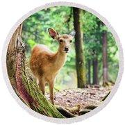 Young Sika Deer In Nara Park Round Beach Towel