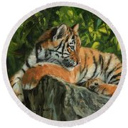 Round Beach Towel featuring the painting Young Tiger Resting On Rock by David Stribbling