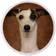 Young Whippet Round Beach Towel by Greg Mimbs