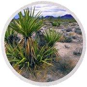 Yucca And Cinder Cones Round Beach Towel