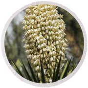 Round Beach Towel featuring the photograph Yucca Flowers In Bloom  by Saija Lehtonen