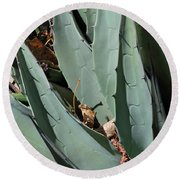 Yucca Leaves Round Beach Towel