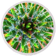 Round Beach Towel featuring the photograph Yucca Sunrise by Darren White