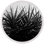Yucca The Spanish Dagger Round Beach Towel