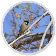 Yucca Valley House Sparrow  Round Beach Towel by Angela J Wright