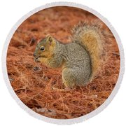 Yum Yum Nuts Wildlife Photography By Kaylyn Franks     Round Beach Towel