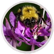 Round Beach Towel featuring the photograph Yummy Pollen by Darcy Michaelchuk